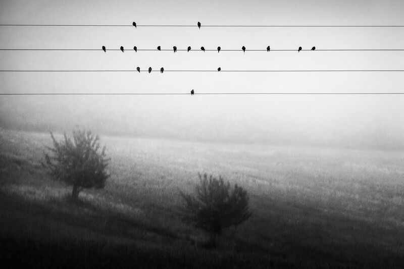 <strong>Birds on a Wire</strong>