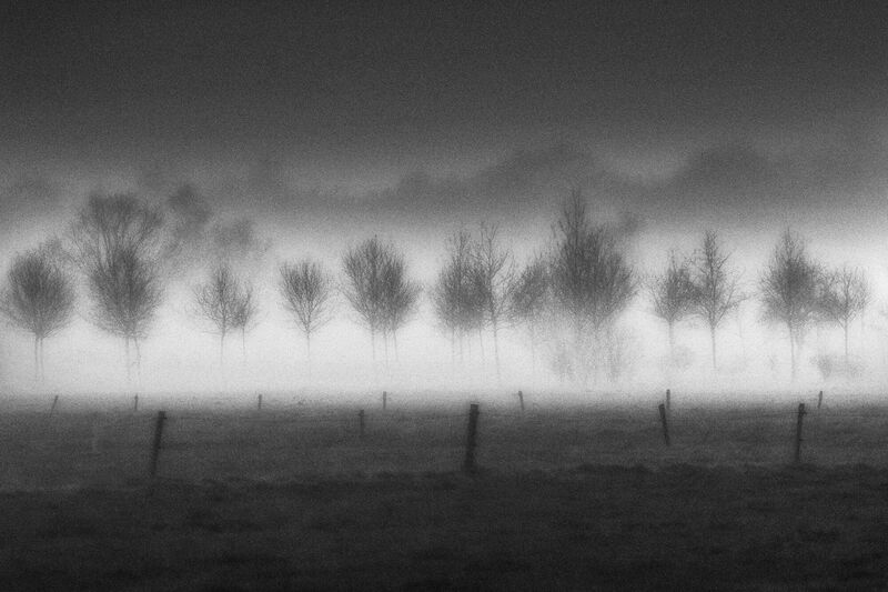 <strong>Trees in the Mist</strong>